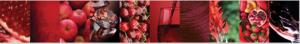 Red-Wine colour palette